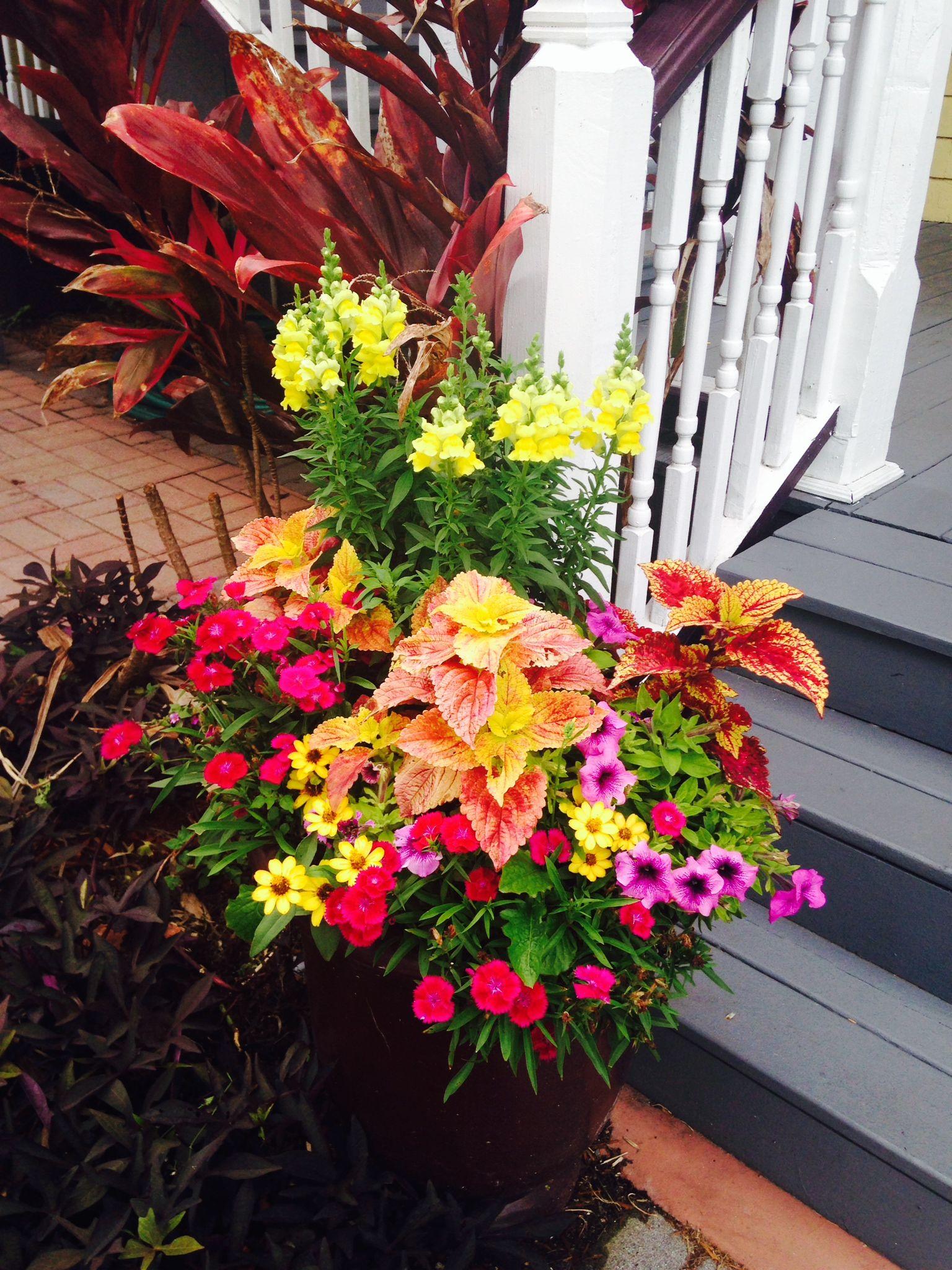 container garden in st augustine | Garden ideas | Pinterest ... on