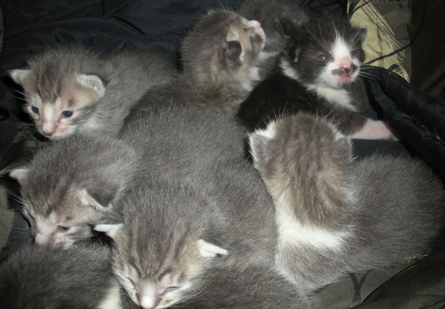 Kittens - age 9 days