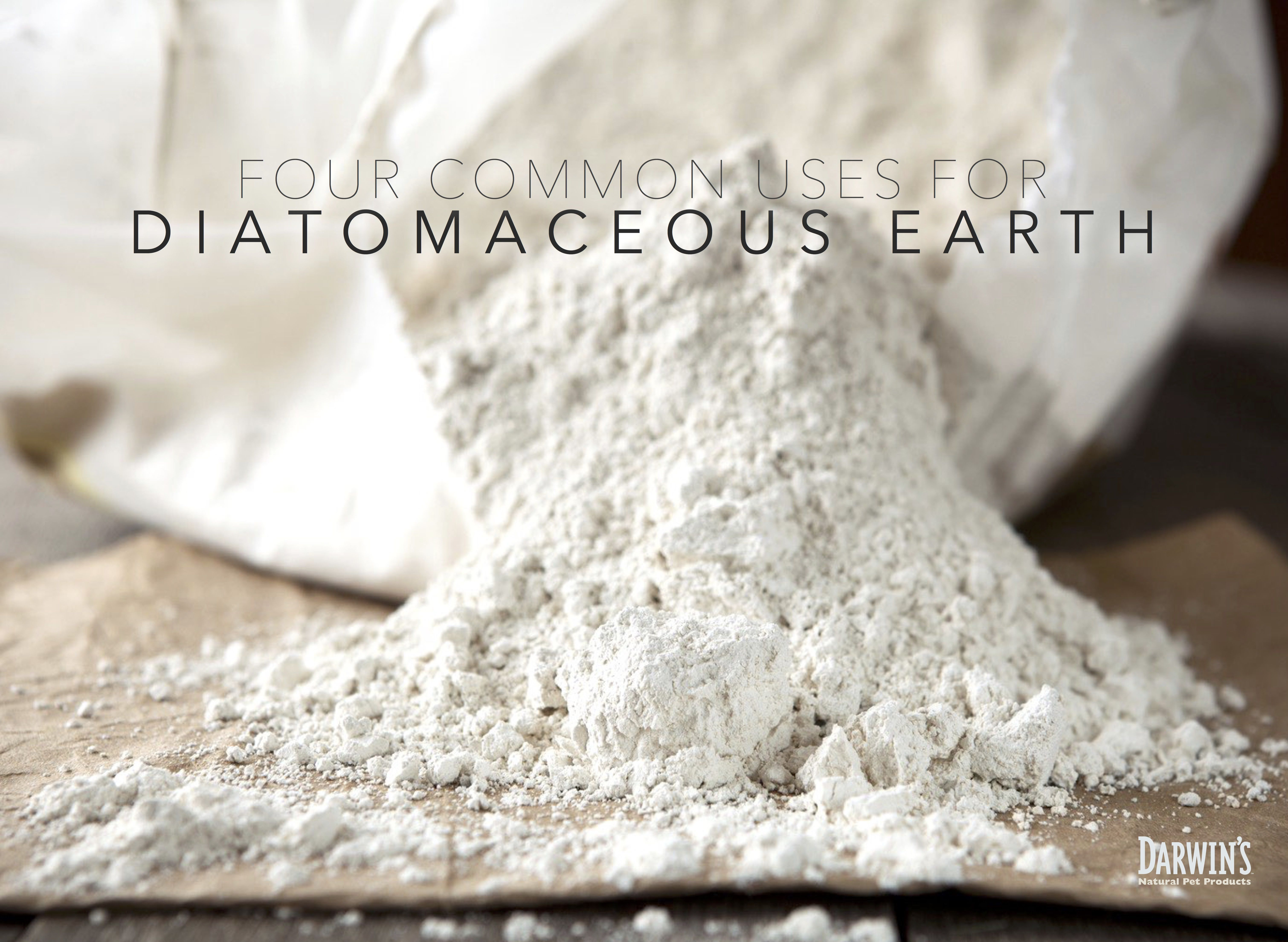 Fighting Fleas with Diatomaceous Earth Diatomaceous