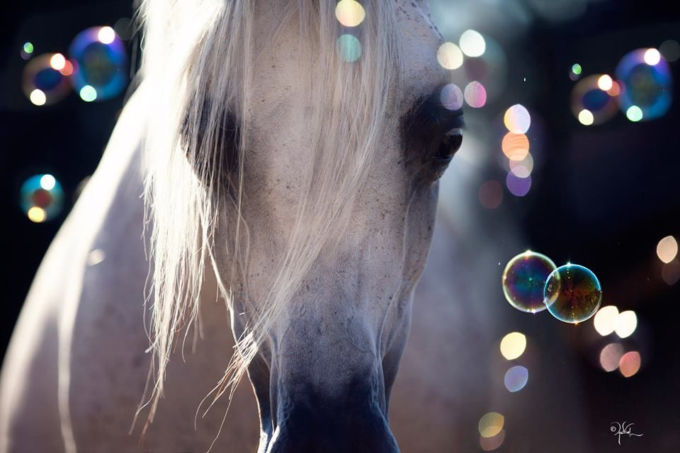 تفسير حلم رؤية الخيل في المنام Beautiful Horses Horses Beautiful Arabian Horses