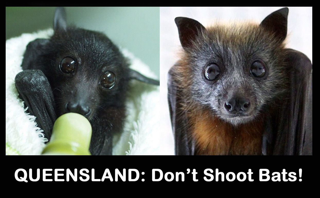 Boycott Barbaric Queensland With Images Animals Beautiful Animal Articles Cute Animals
