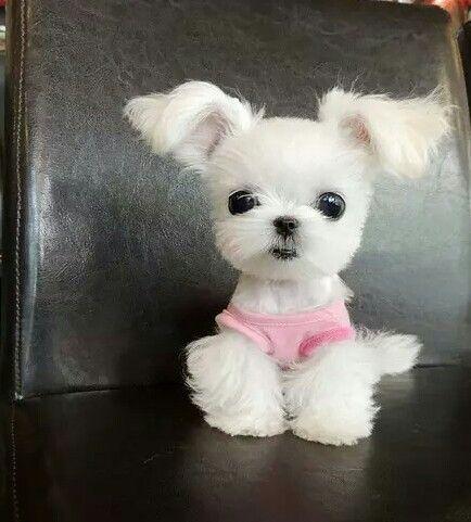 Descubre Y Comparte Las Imágenes Más Hermosas Del Mundo Mascotas Bonitas Perritos Minúsculos El Perro Más Lindo Del Mundo