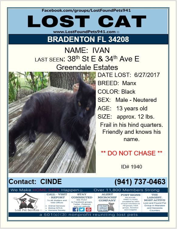 Have You Seen Ivan Lost Cat Missing Pets Bradenton Fl 34208 Lostfoundpets941 Lostpetservices Lost Cat