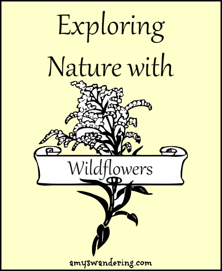 exploring nature with wildflowers kid blogger network activities crafts nature homeschool. Black Bedroom Furniture Sets. Home Design Ideas