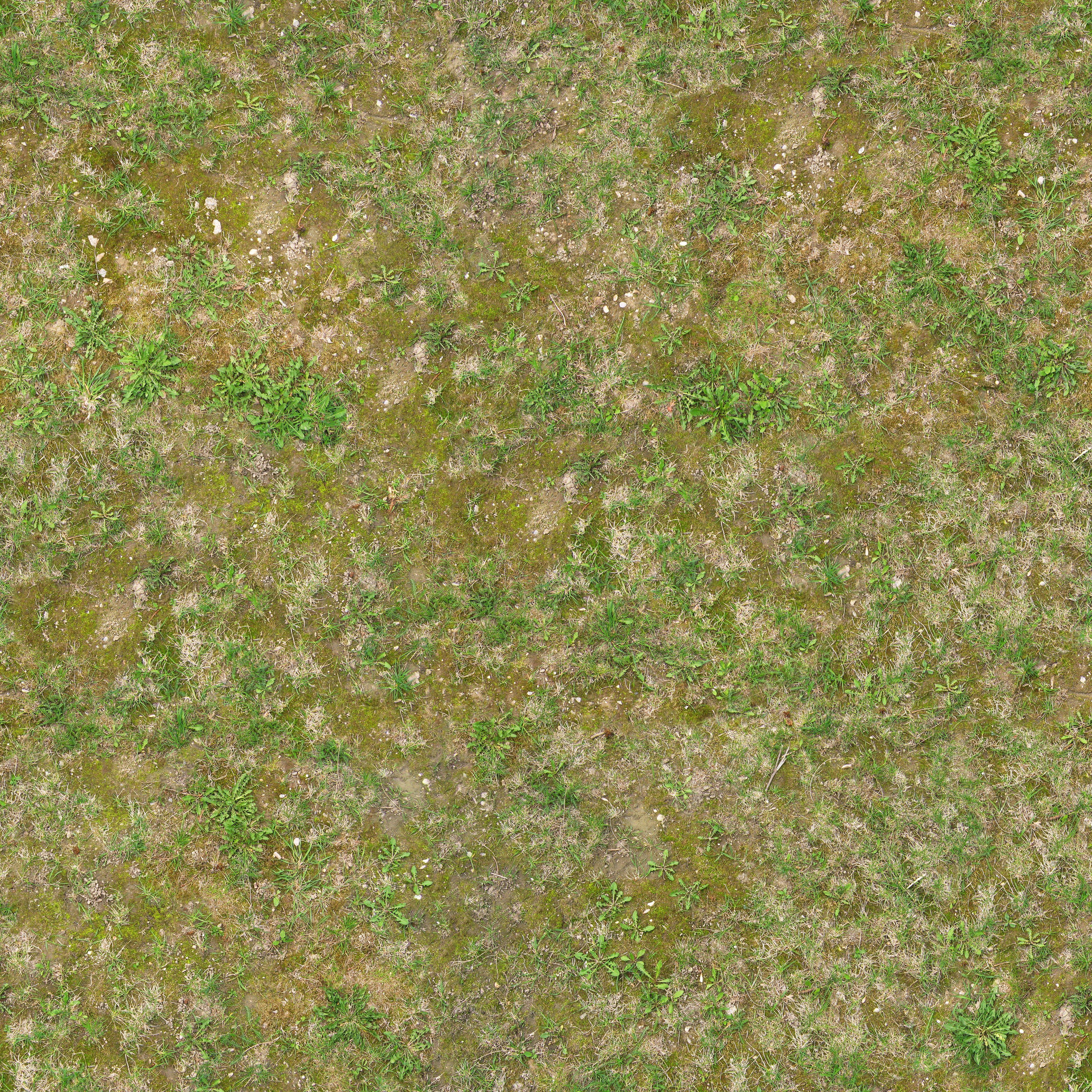 Textures architecture roads roads dirt road texture seamless - Texture Jpg Ground Grass Seamless