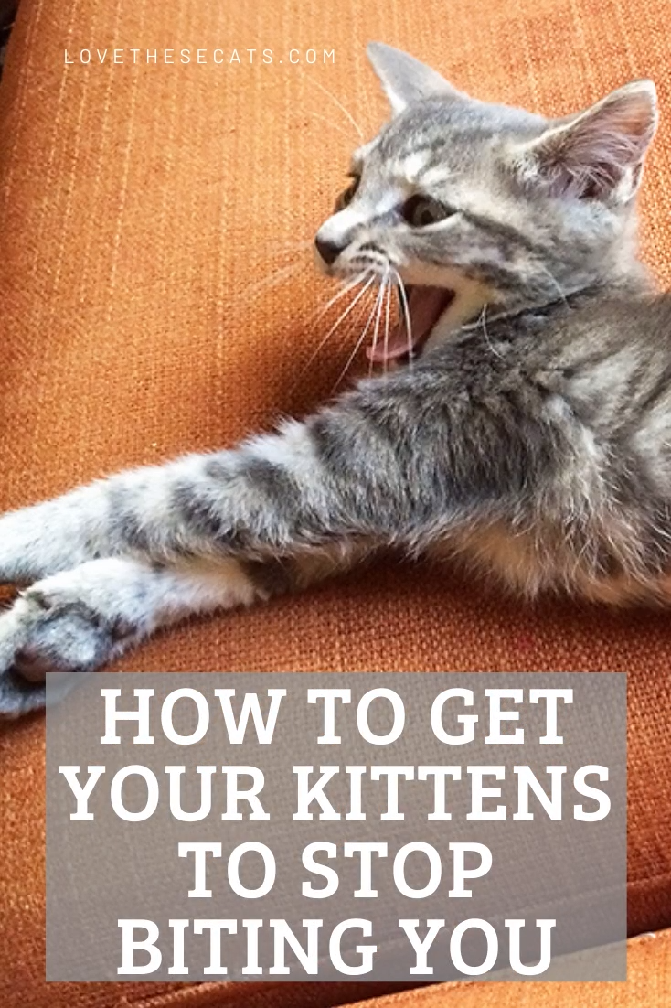 How To Get Your Kitten To Stop Biting You Video In 2020 Kitten Biting Cat Biting Kittens Gifts