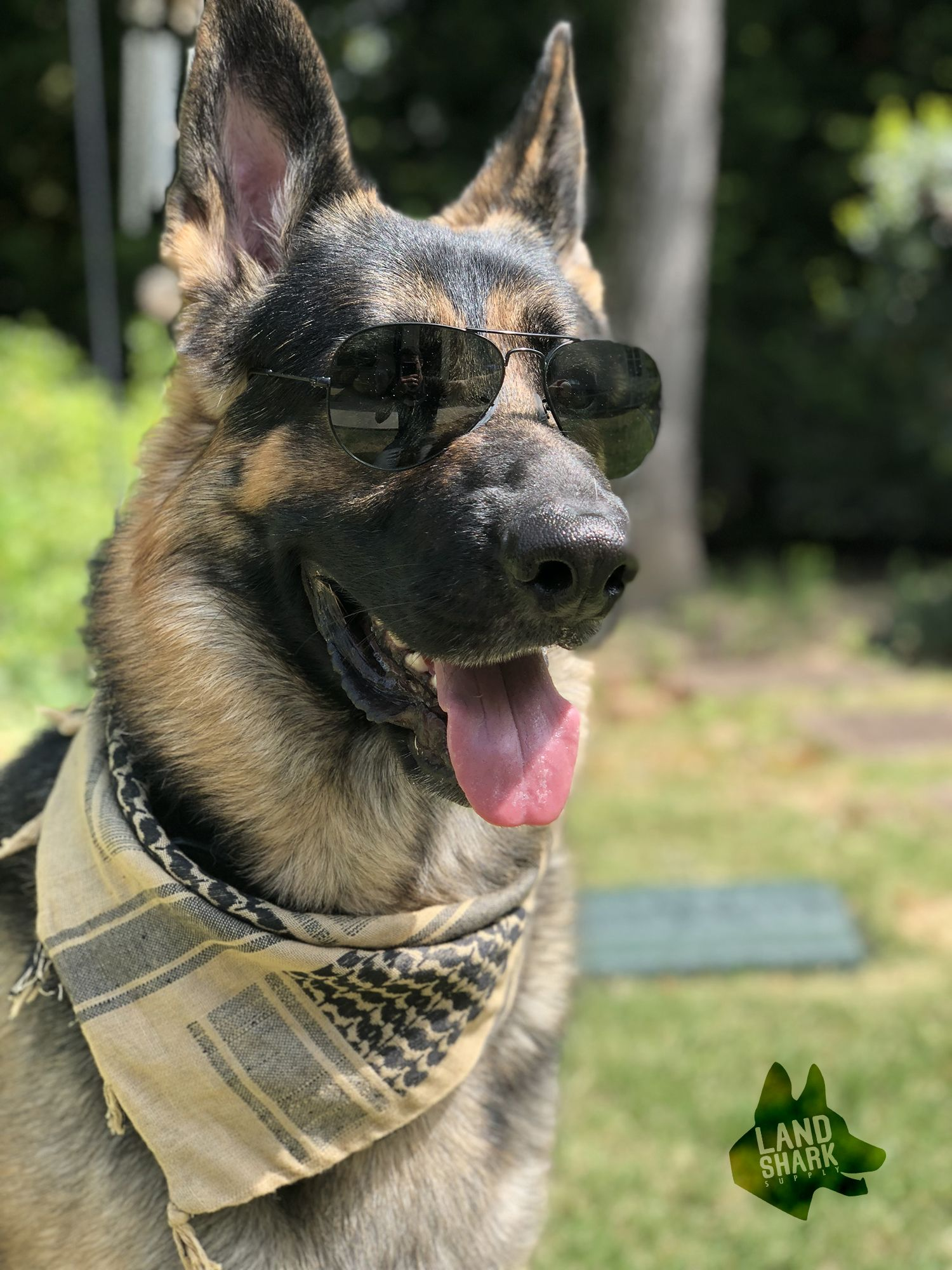Coolest Dog In Town Bandana From Landsharksupply Com German