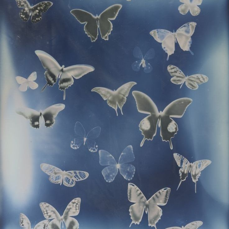 Image about blue in la mariposa by 天使的眼泪 on We Hea