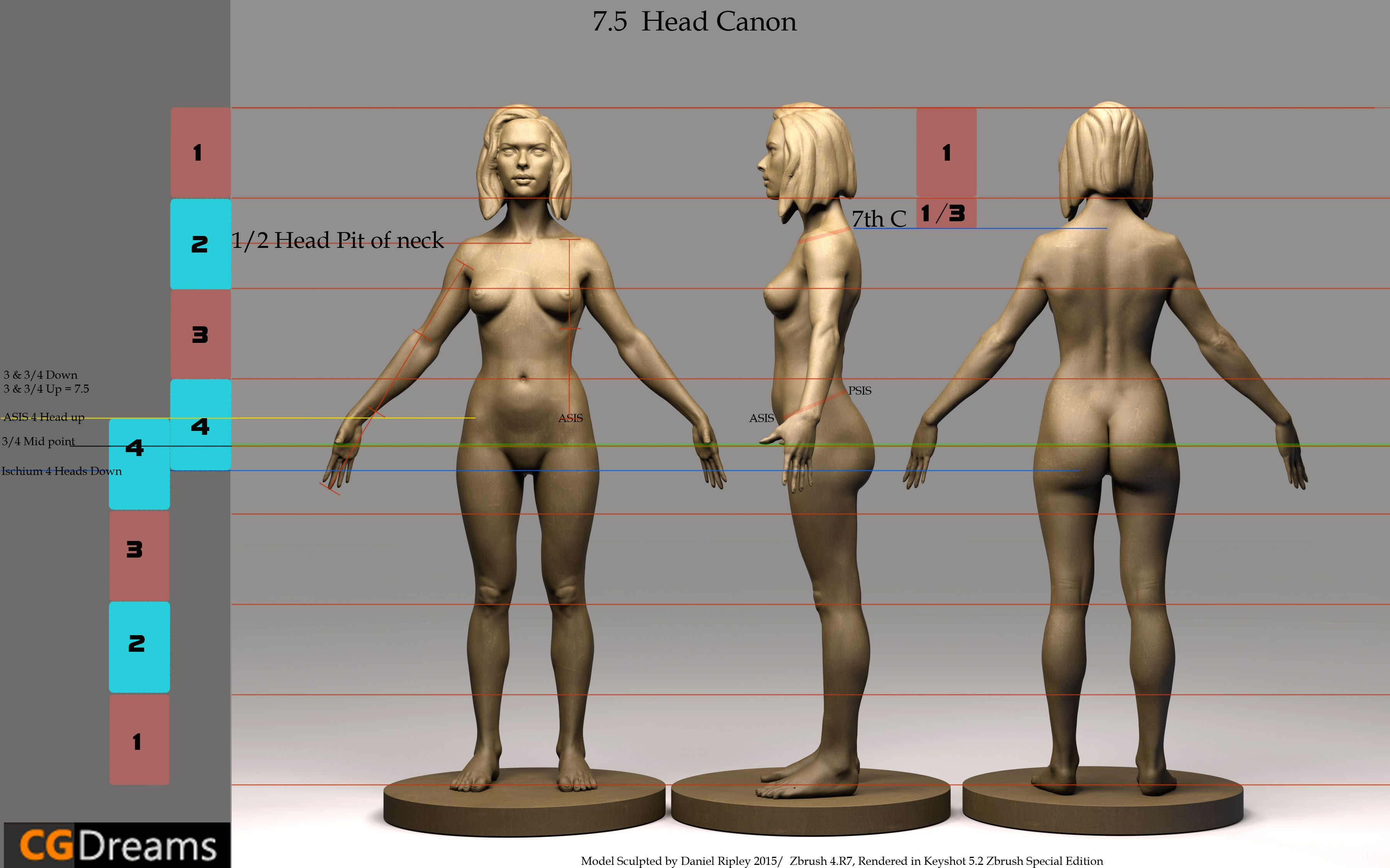 Human Anatomy Proportions Basic Guide. | Tpose | Pinterest