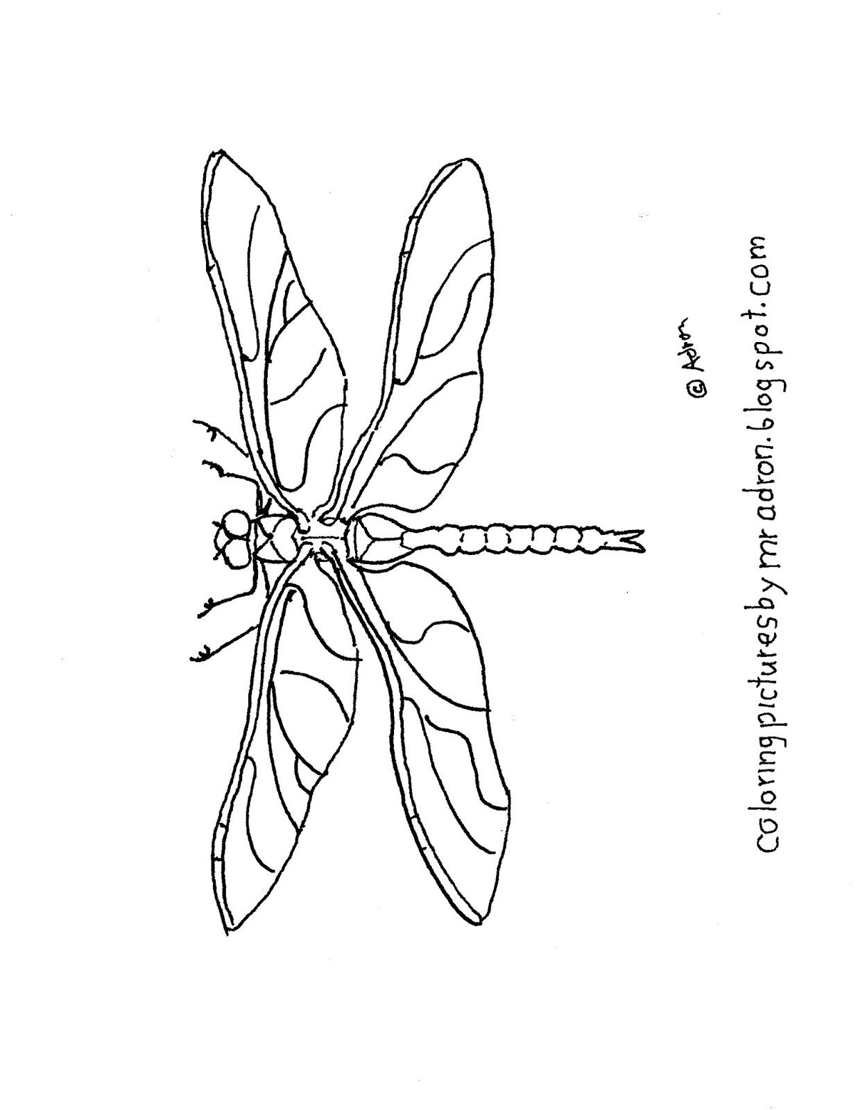 Coloring Pages For Kids By Mr Adron Printable Simple Dragonfly