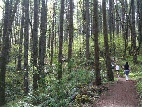 4 2 Miles Dog Friendly 30 Minutes From Salem Oregon State Parks