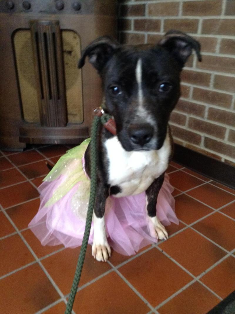 Meet Teddy S Rescue In Findlay Oh A Petfinder Adoptable Terrier