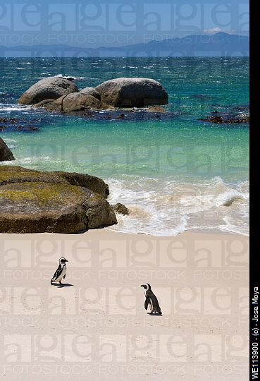 Penguins at Boulders Beach, Simons Town, South Africa