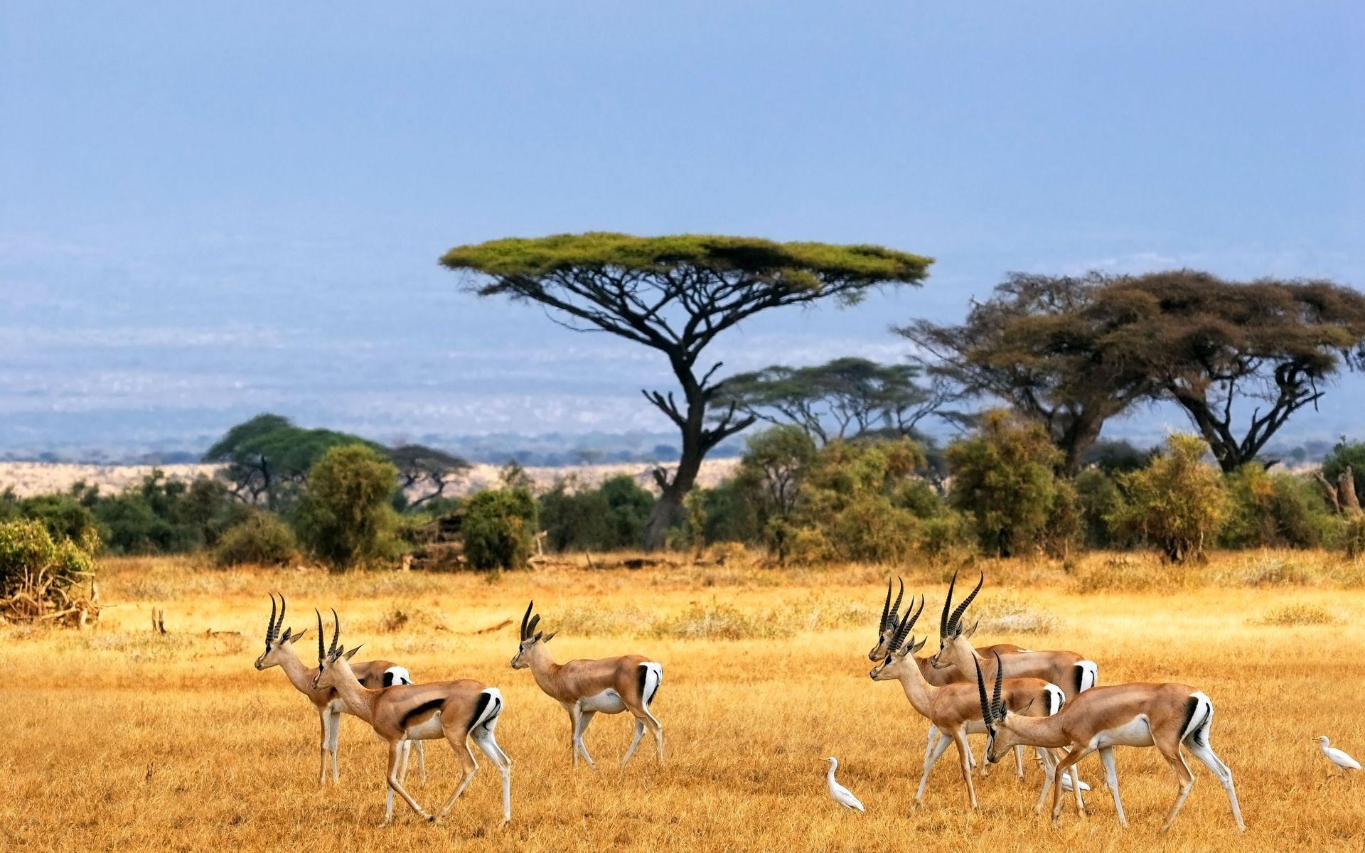 african landscape photos savanna, african landscape