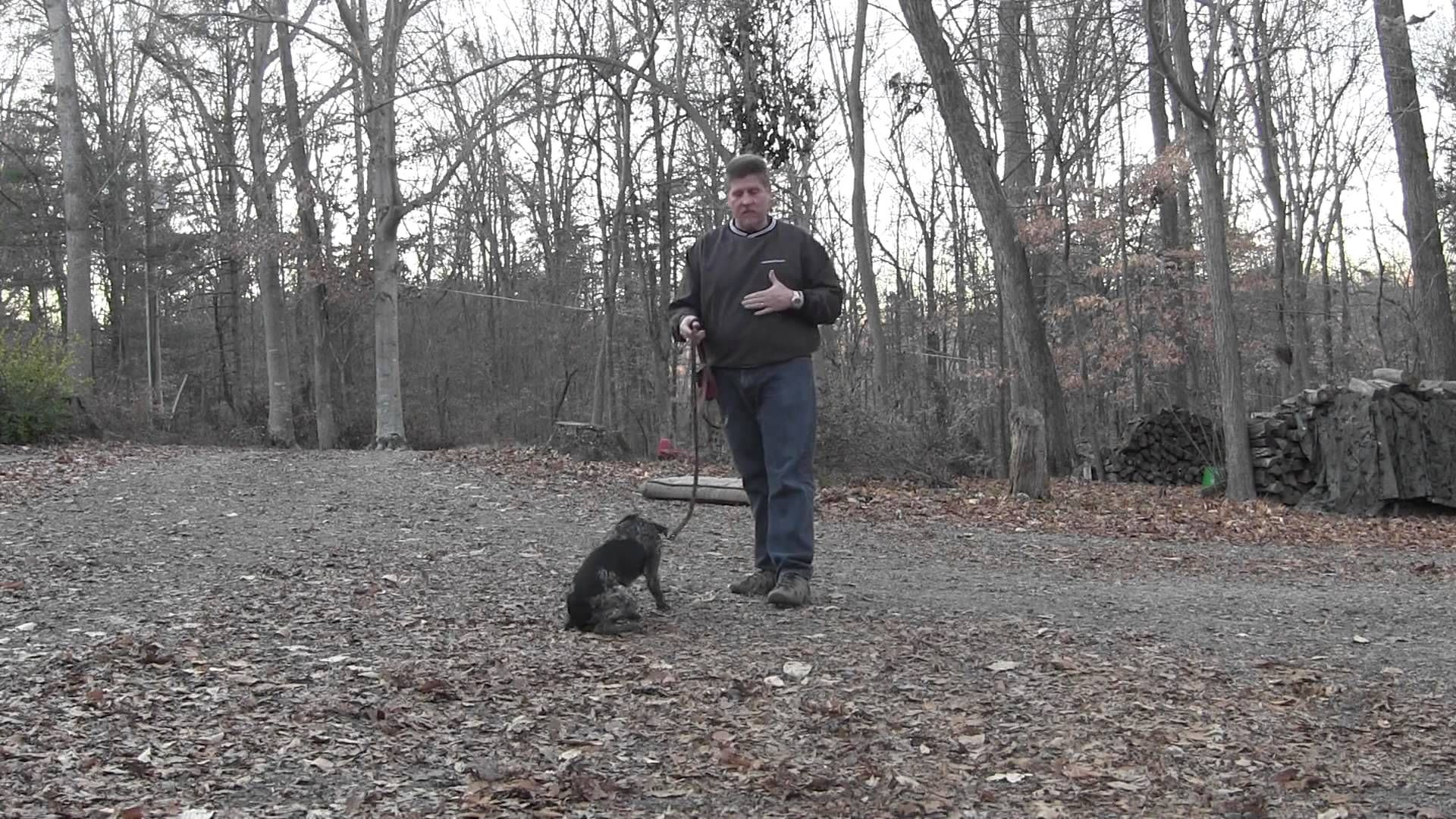 German Shepherd Puppies Salem Oregon Ideas