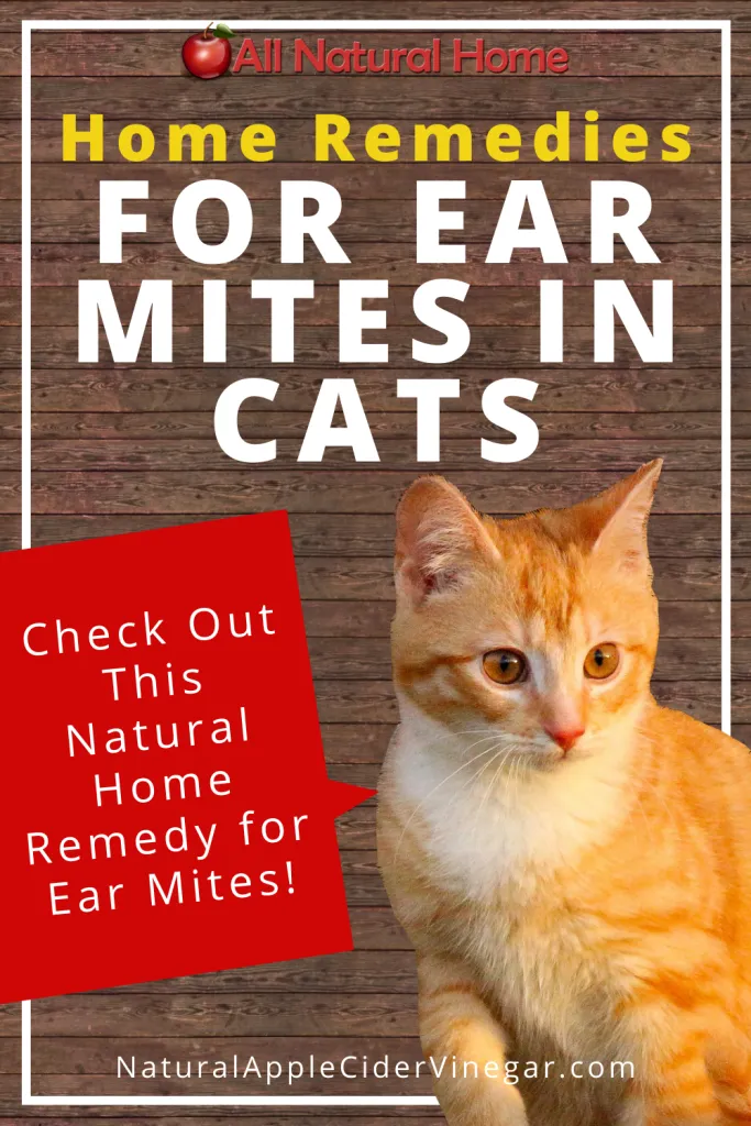 How To Get Rid Of Ear Mites In Cats Natural Home Remedy In 2020 Cat Remedies Cat Ear Mites Natural Home Remedies