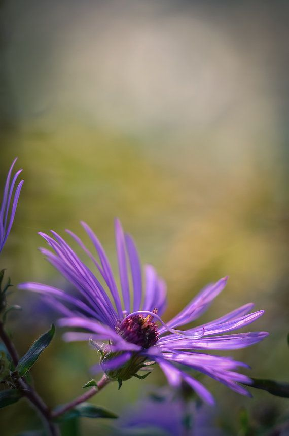 Fine Art Nature Photography For You And Your Fashionable Home Fine Art Nature Photography Flower Ph Nature Photography Flowers Nature Art Vertical Wall Art
