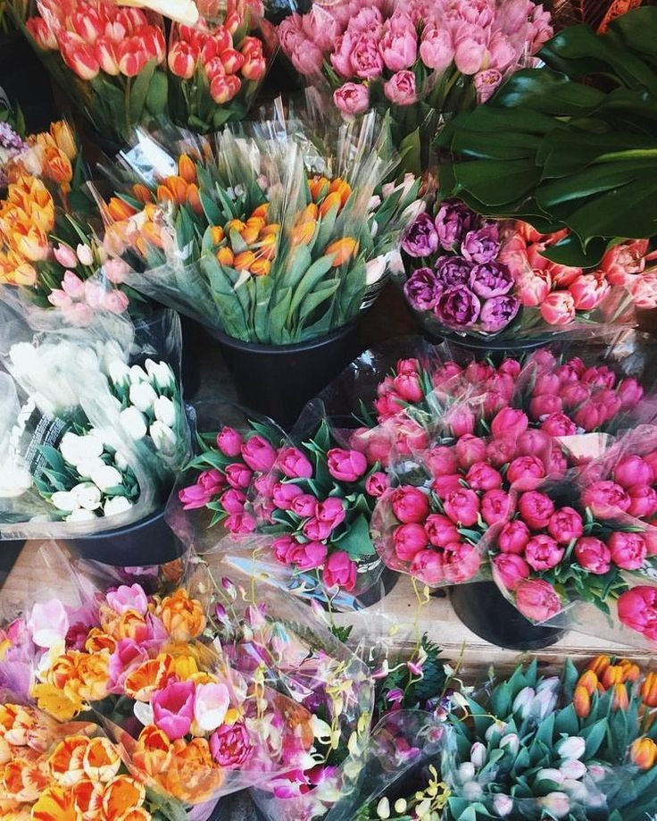 Tulips Galore Pretty Flowers Beautiful Flowers Flower Aesthetic