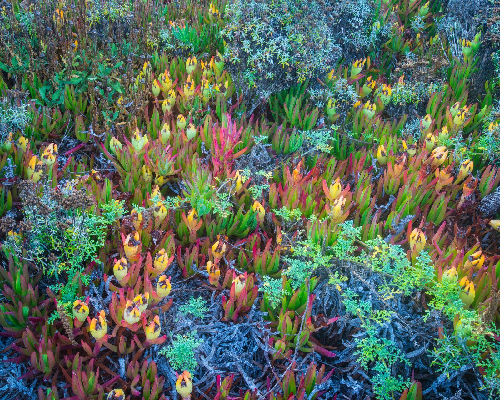 wild garden no.2   Carmel beach