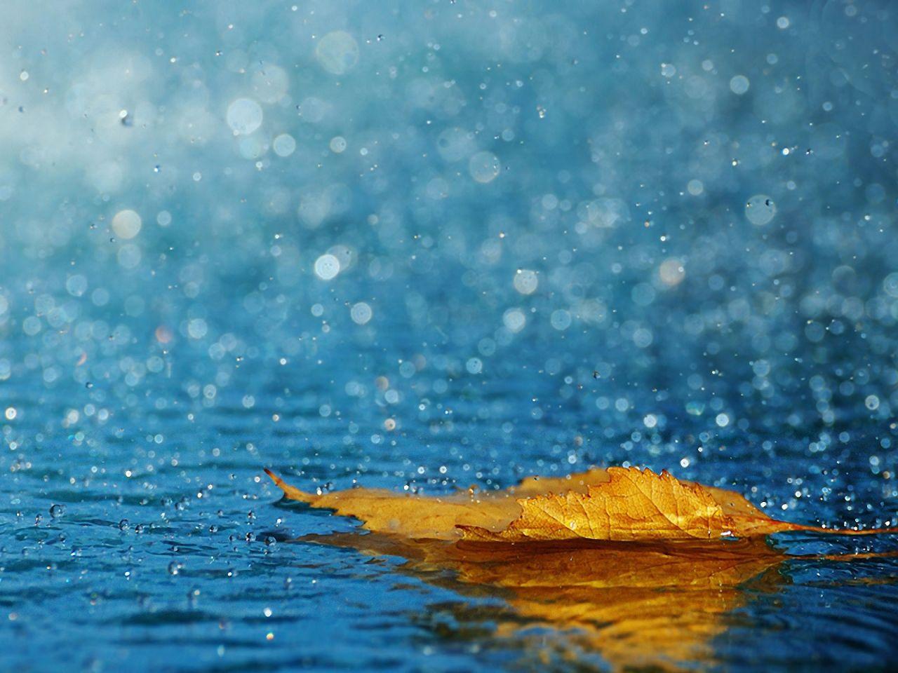 Kapi Slike List Pozadine Jesen Vektor Kiša Pozadine Voda