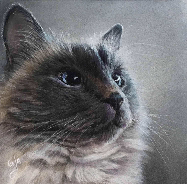 Siamese Cat Art— Guildbrook Art Fine Art Portrait and