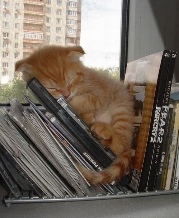 """cute♥ but why here?   I'm sure you can find more cozy and """"stable"""" places to fall asleep.  ;)"""