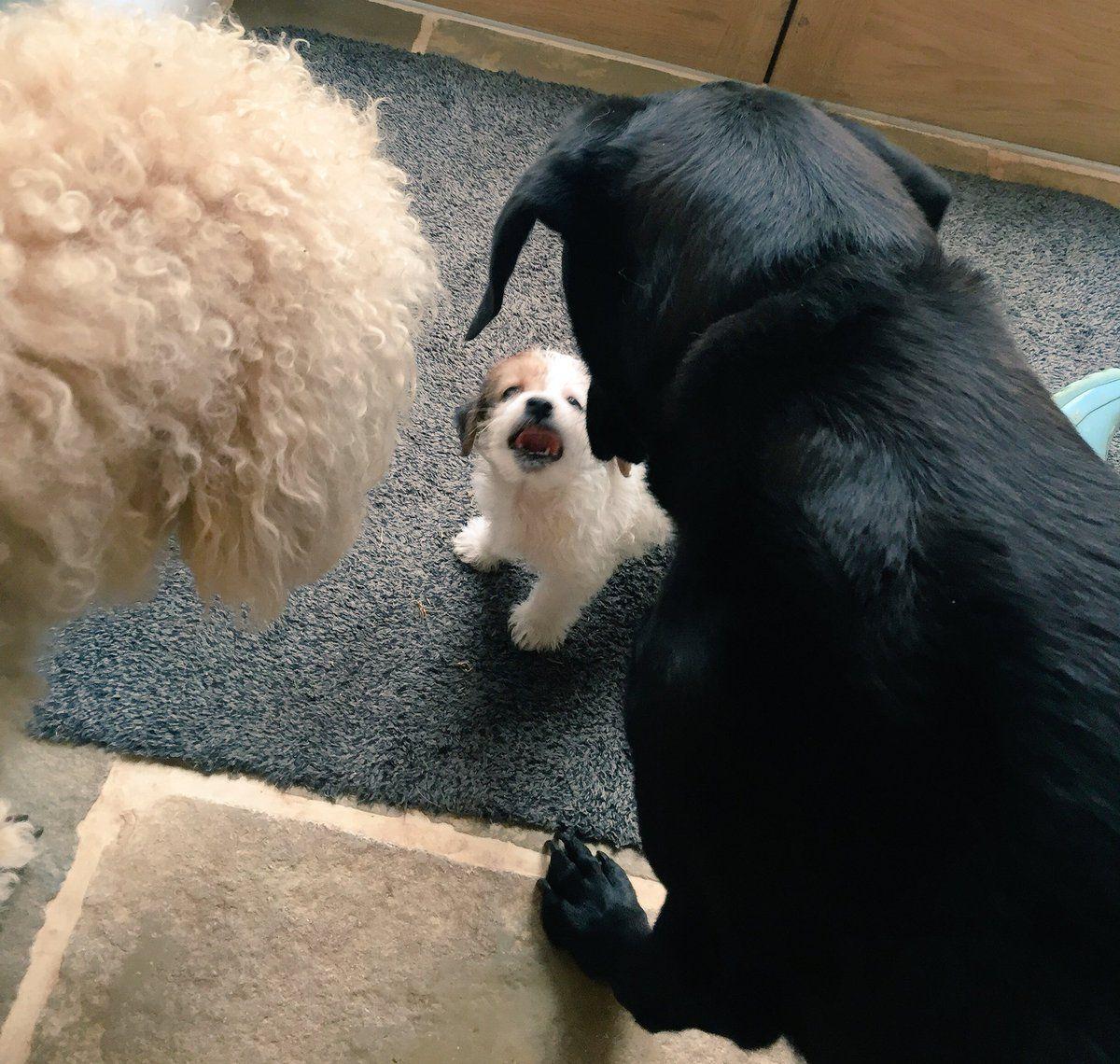 Yeah, I'm small. So? #MONDAYMotivation #Dogs #Fun #PAWS #CuteAlert #Leadership #BIZBoost