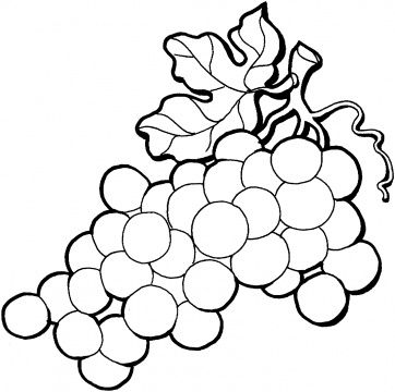 Grapes Coloring Pages Super Coloring Fruit Coloring Pages Free Coloring Pages Free Printable Coloring Pages