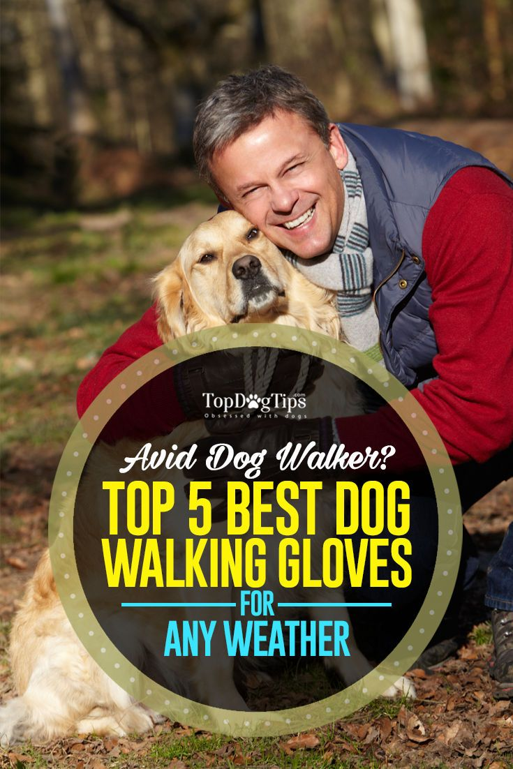 5 Best Dog Walking Gloves For Any Weather Dog Walking Dog