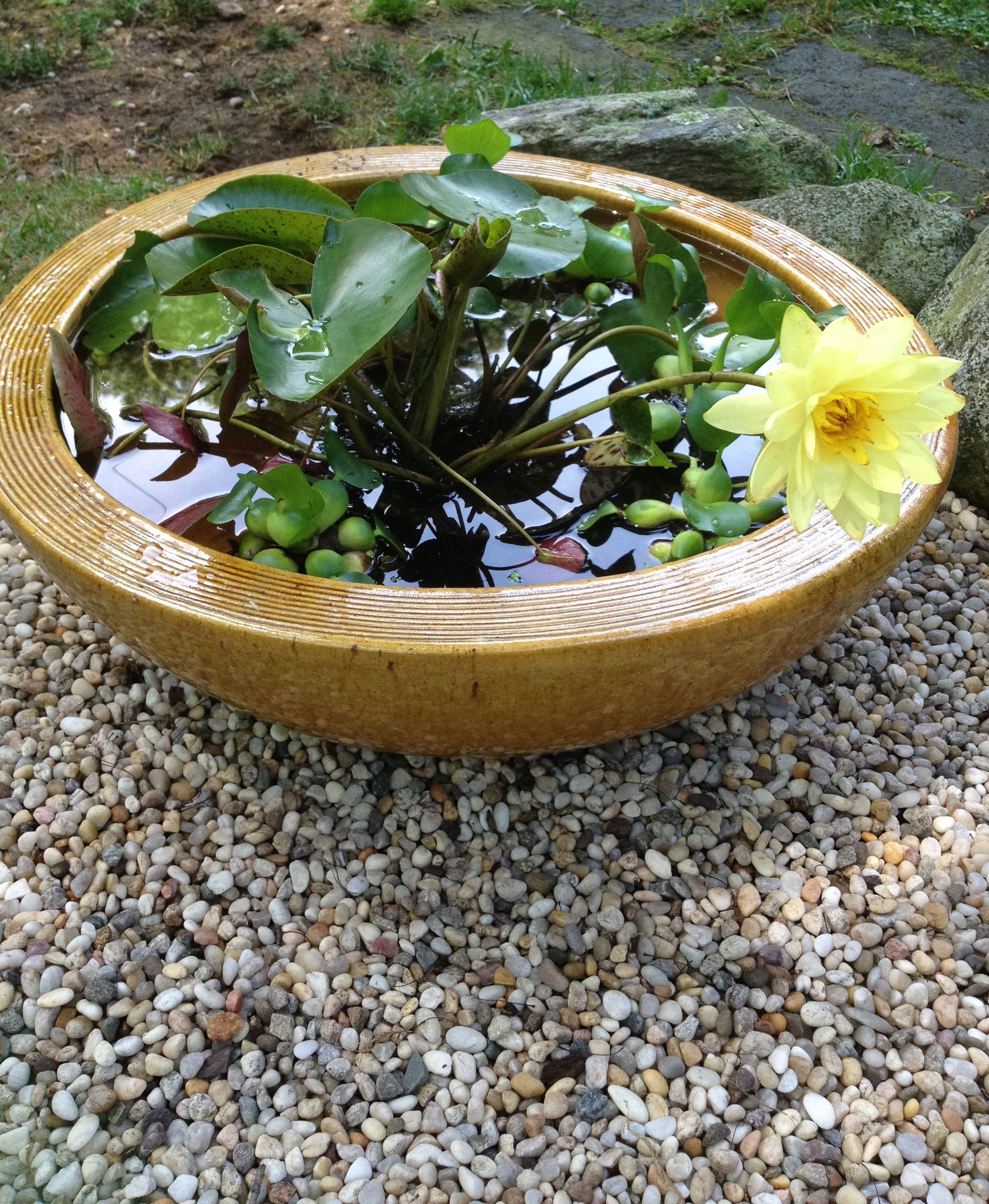 Small Water Gardening - Bing Images