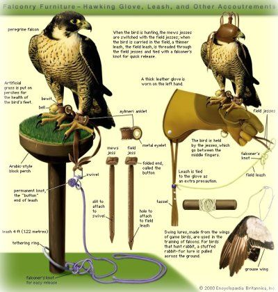 Falconry Equipment Diagram Projects Hobbies Sports Etc