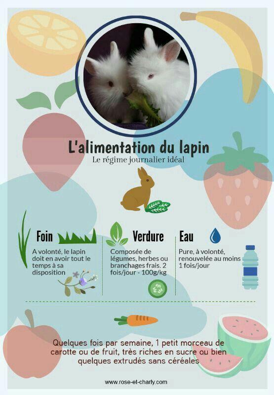 Comment S'occuper D'un Lapin Nain : comment, s'occuper, lapin, Bisous, Alimentation, Lapin,, Lapin, Compagnie,