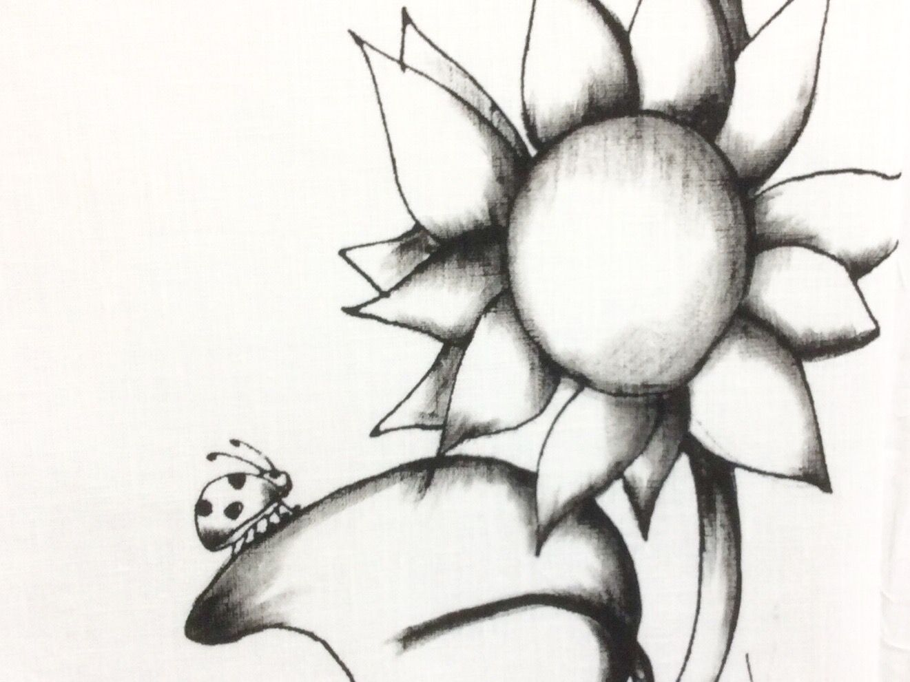 Sunflower Line Drawing : Sunflower illustration from popper design finland illustrations by