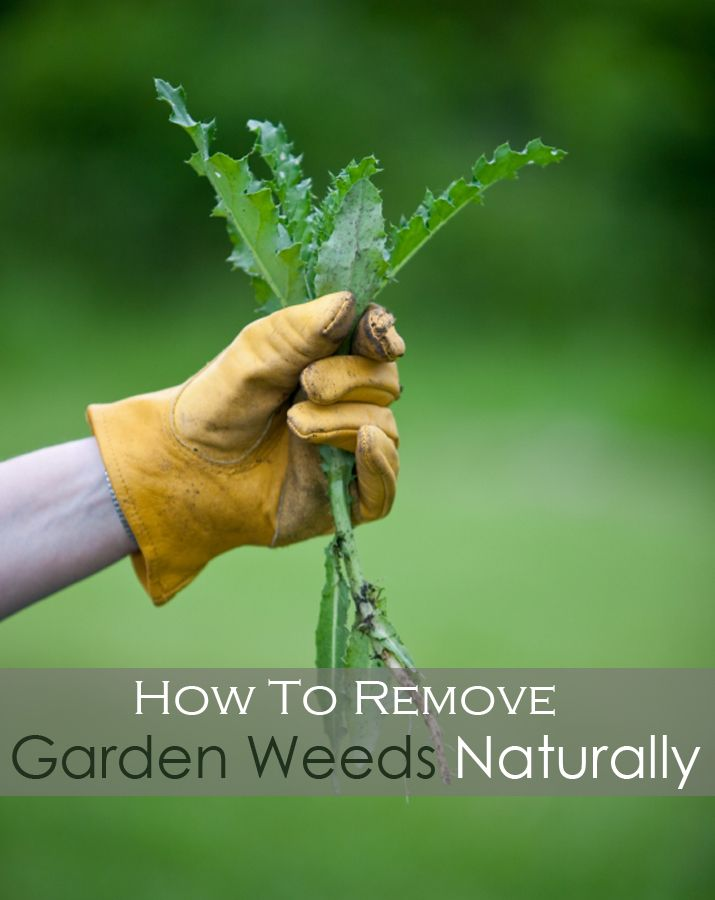 How To Remove Garden Weeds Naturally