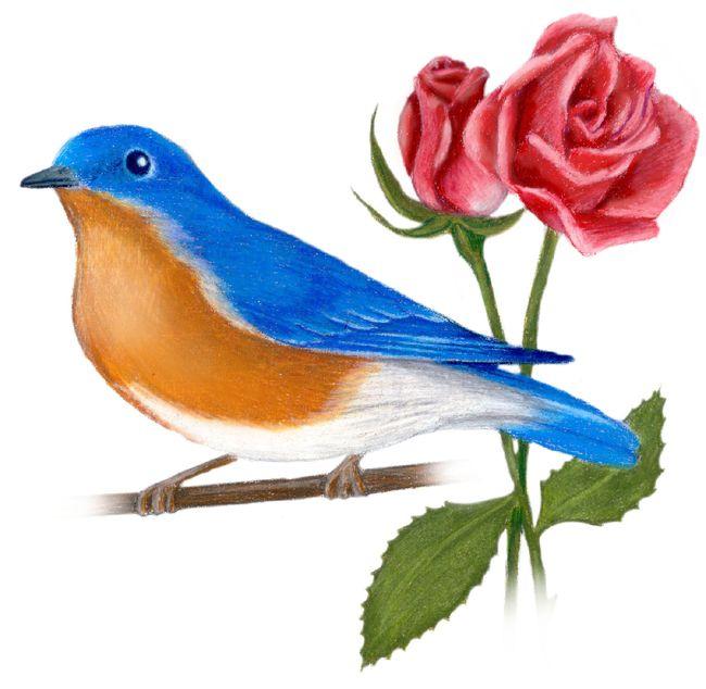 New York State Bird And Flower Eastern Bluebird Sialia Sialis Rose Rosa Carolina State Birds Bird Prints Blue Bird