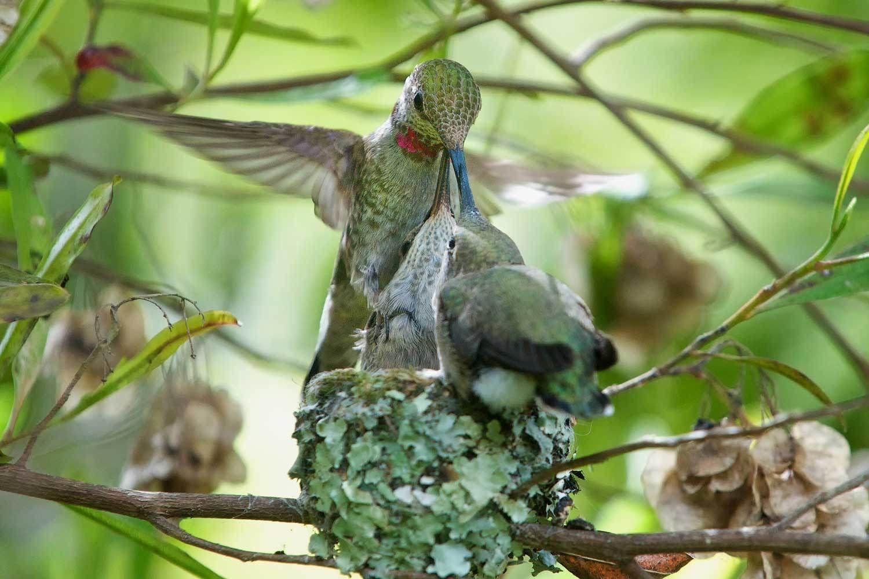 Pin on Hummingbird Enchantment Photos