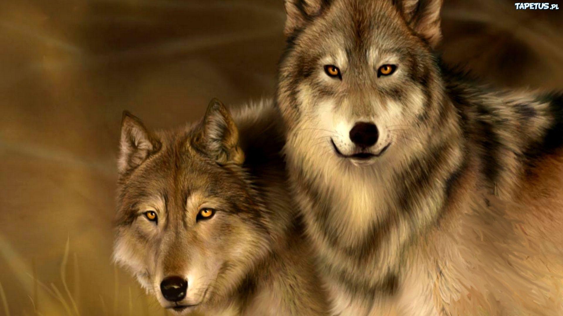 wilk i zachód słońca gif - Szukaj w Google