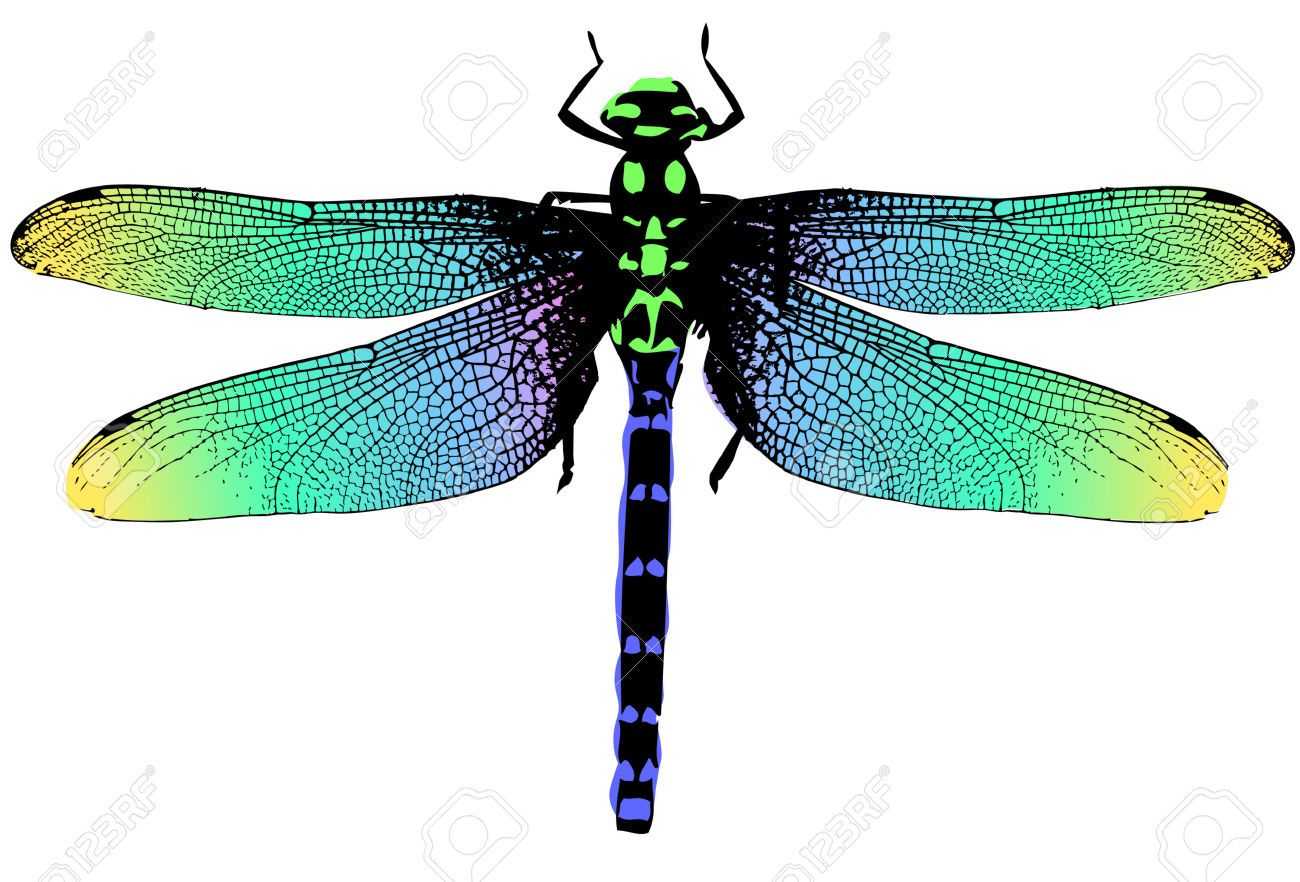 stock vector dragonfly - art