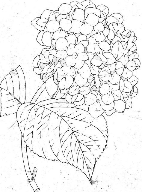 Hydrangea Line In 2020 Fabric Painting Drawings Coloring Pages