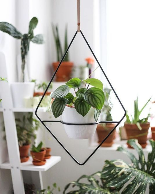 indoor hanging 15 Hard To Kill Hanging Plants Thatll Make Your Home Instantly Beautiful   15 schwer zu tötende Hängepflanzen die Ihr Zuhause sofort schön m...