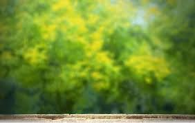 Image Result For Nature Background Hd Cb Editing Sai Background