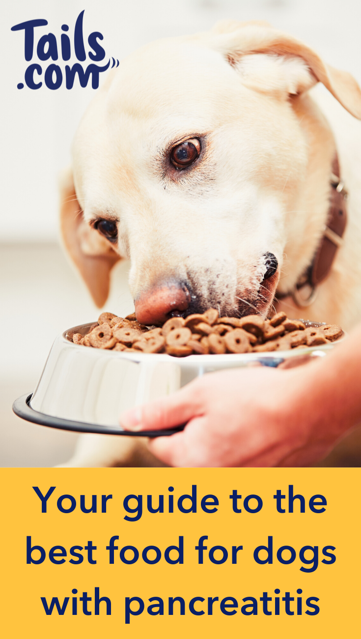 Your guide to the best food for dogs with pancreatitis in