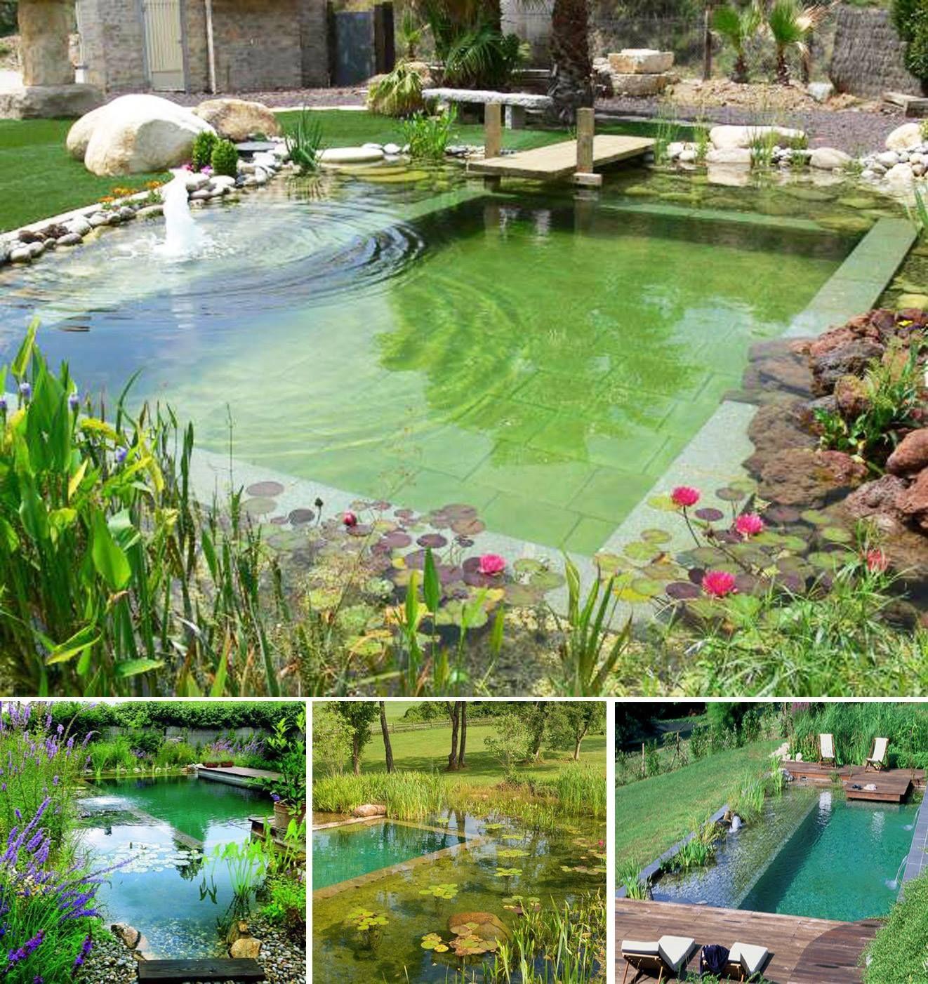 Natural pool pond piscinas naturales barro arcilla for Construccion albercas naturales