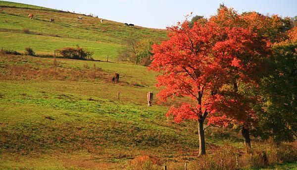 Grazing Horses In Autumn