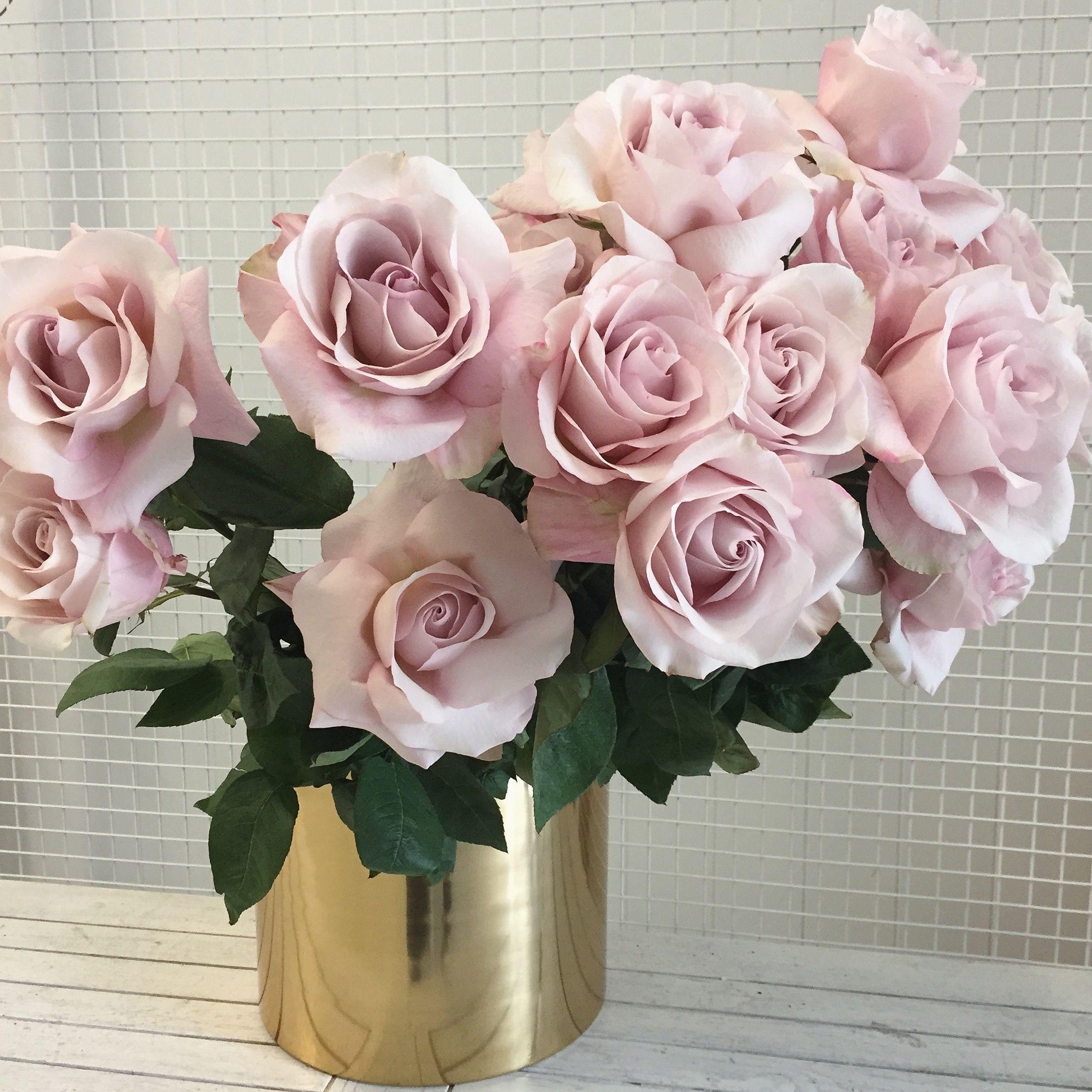 Pin by anna cimicky on floral portfolio pinterest