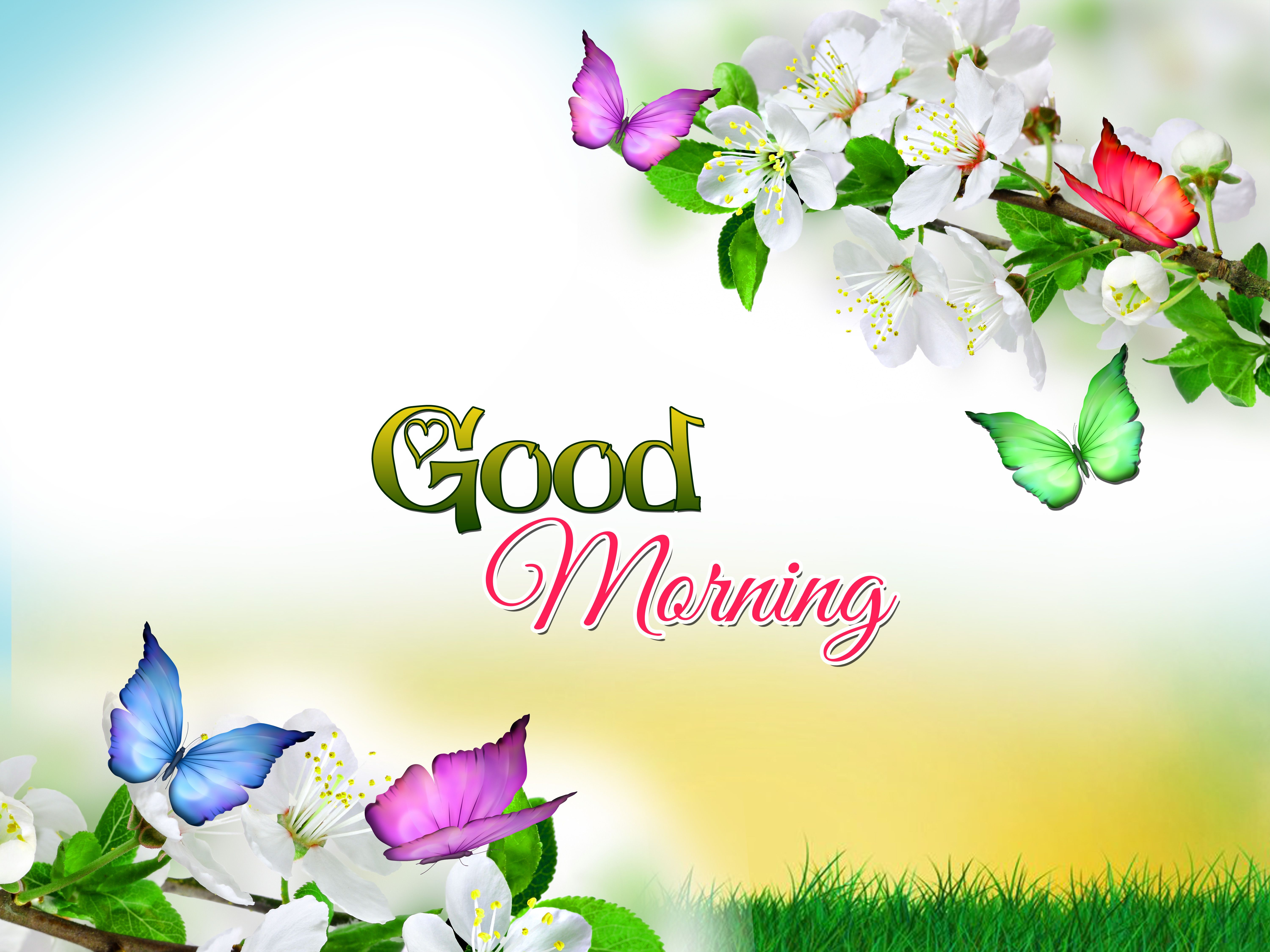 Full Hd Good Morning Wallpapers For Facebook Free Download