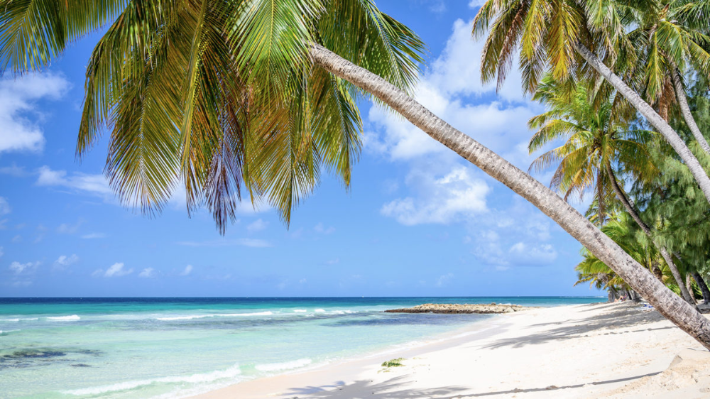Caribbean Zoom Virtual Backgrounds Make Boring Meetings Better Beach Background Background Beach Images