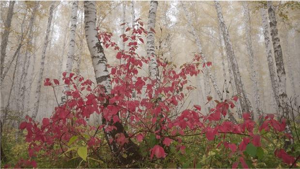 Чарівлива осінь: 11 фото, чому ми любимо цю пору року ...
