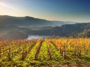 Late afternoon at Viader winery, Howell Mountain