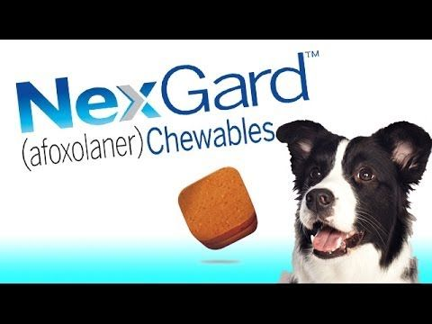Pet Medical Center Is Approved To Carry Nexgard Chewable Flea Flea And Tick Fleas Tick Repellent